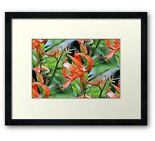 Turk Cap Lilies After Morning Rain Framed Print