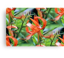 Turk Cap Lilies After Morning Rain Canvas Print