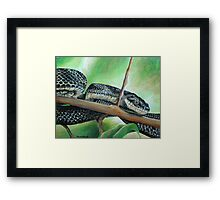 Friendly Black Rat Snake Framed Print