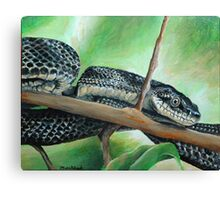 Friendly Black Rat Snake Canvas Print