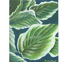 Hosta Plant Leaves Painting Photographic Print