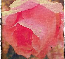 Dirty Rose by SuzyPhoto