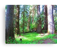 Forest in Olympic National Park Canvas Print