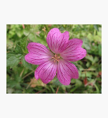 Pinking Sheer Photographic Print