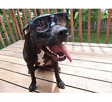 Doggie with Sunnies Photographic Print