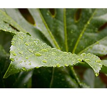 Water Droplets on Leaf Photographic Print