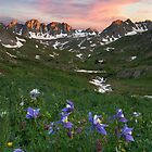 Colorado Wildflower Images - Columbine at American Basin 1 by RobGreebonPhoto