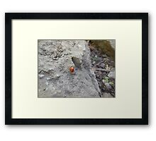 ladybug on rock Framed Print