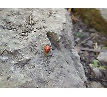 ladybug on rock Photographic Print