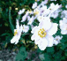 different 8bit flower by Finnian Wilder