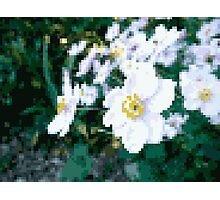 different 8bit flower Photographic Print