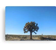 joshua tree (small) Canvas Print