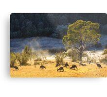 Australian Winter Metal Print
