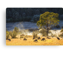 Australian Winter Canvas Print