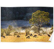 Australian Winter Poster