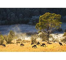 Australian Winter Photographic Print