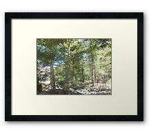 spirit of trees Framed Print