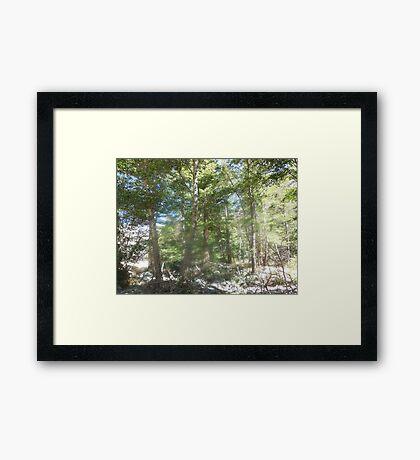 spirit of trees Framed Print