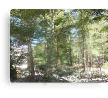 spirit of trees Canvas Print