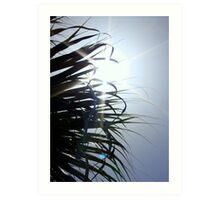 Sunstar Behind Palm Tree Art Print