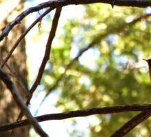 Birds in the Trees Sticker