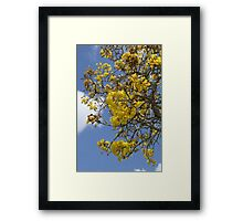 Springtime Tree with Yellow Flowers Framed Print