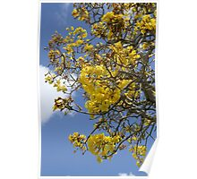 Springtime Tree with Yellow Flowers Poster
