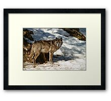 Black Wolf In Snow Framed Print