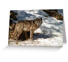 Black Wolf In Snow Greeting Card