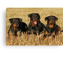 rottweiler group Canvas Print