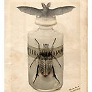 A Bat Upon a Bottled Beetle by RichardSmith