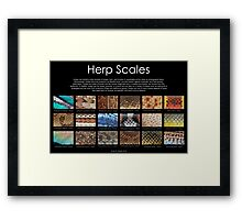 Herp Scales Poster Framed Print
