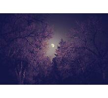 Purple Tree Moon Photographic Print