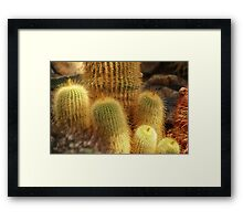 Colorful Cactus Framed Print