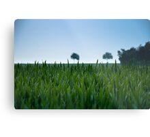 Field and Farmland Metal Print