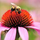 Bee Happy by Poete100