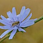Insect on a Blue Flower by Ikramul Fasih