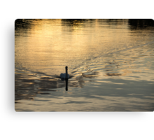 Golden Watercolor Ripples - the Gliding Swan Canvas Print