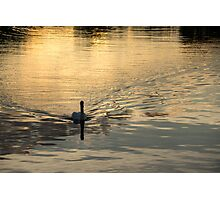Golden Watercolor Ripples - the Gliding Swan Photographic Print