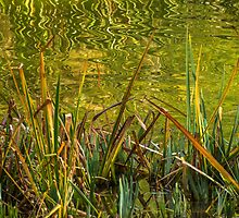 Water Grass. by Bette Devine
