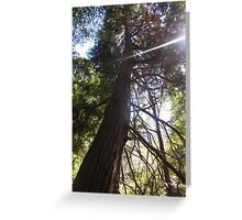 stretching tree Greeting Card