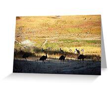 Australian emus and kangaroos at sunrise Greeting Card