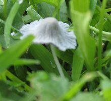 mushroom by Melissa, Sue Ball
