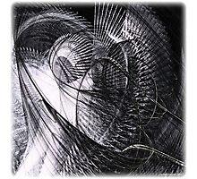 Dead pigeon Photographic Print