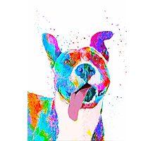 Pit Bull Terrier Pop Art Pet Portrait Photographic Print