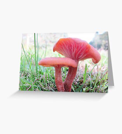 Lacaria Lateritia Greeting Card