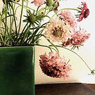 Pink Scabiosa, Green Vase by Barbara Wyeth