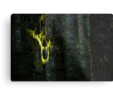 Hanging - Boulder River Wilderness, Washington Metal Print