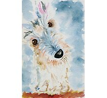 Hamish The Scottie Dog Photographic Print