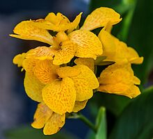 Orchid Vanda Yellow by Alec Owen-Evans